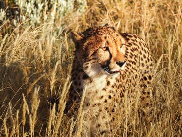 Voyage sur mesure Tanzanie Safari Tarangire Savane Léopard