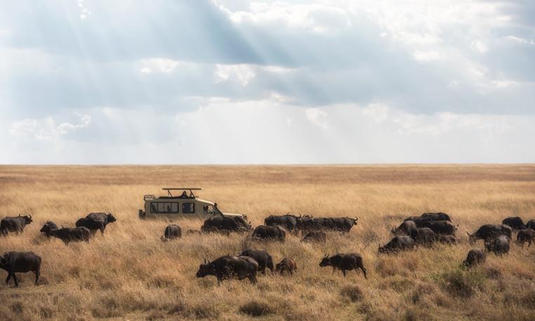 Voyage sur mesure Tanzanie Safari Serengeti