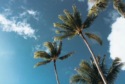 low-angle-photography-of-palm-trees-1168