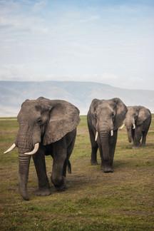 Voyage sur mesure Tanzanie Safari Tarangire Savane Elephants