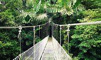 Arenal_Hanging_Bridges,_Costa_Rica2.jpg