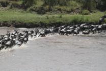 Voyage sur mesure Tanzanie Safari Serengeti Grande migration