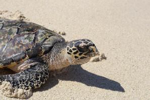 turtle-2980465_1920.jpg