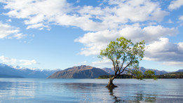 photo-of-tree-on-lake-2463951.jpg
