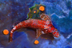 blenny-painting