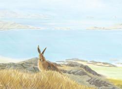 hare-unframed
