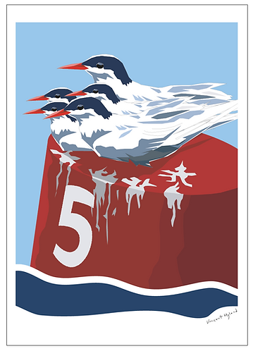 5 Terns