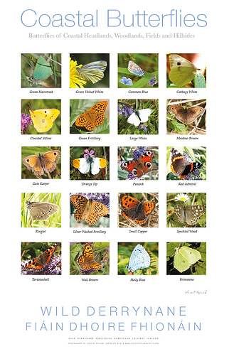 Special Offer - Coastal Butterflies