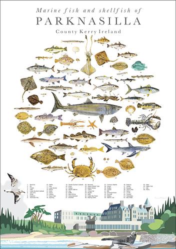 Marine Fish and Shellfish of Parknasilla A2 illustrated Print