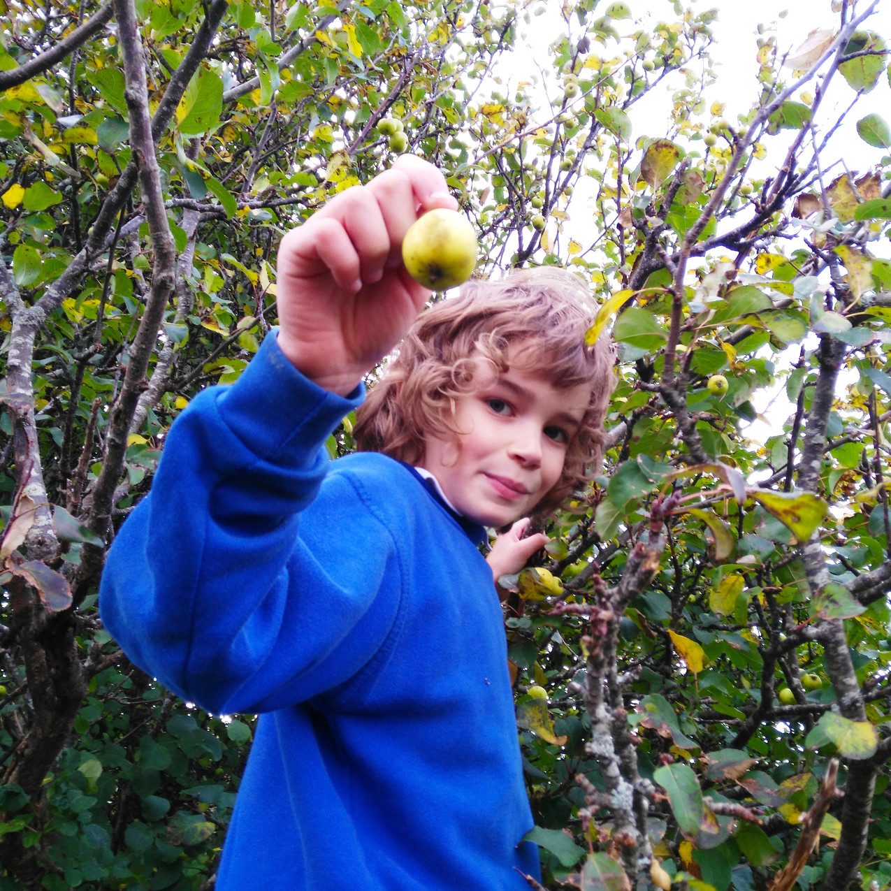 Time to Pick Apples