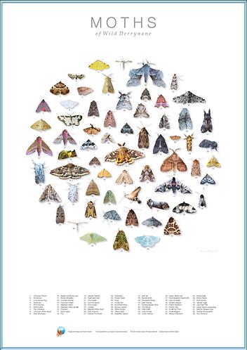 Moths of Wild Derrynane