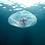 Thumbnail: Moon Jellyfish