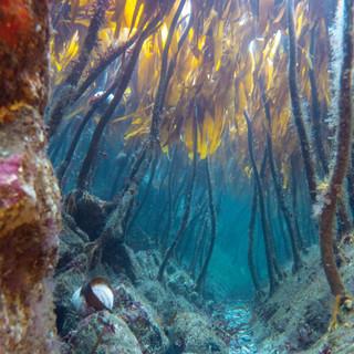Kelp Forest - Wild Parknasilla Exhibition.