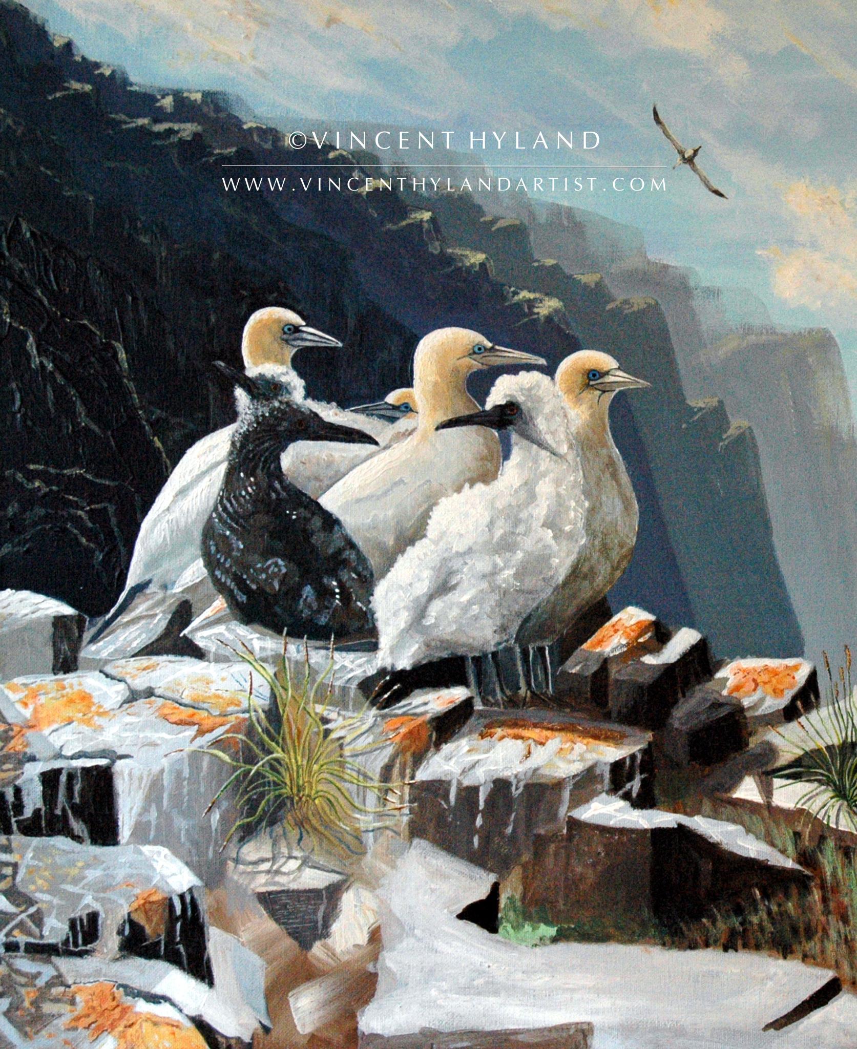 gannet-2048