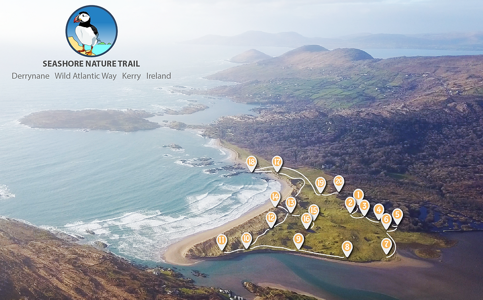 Screen Shot 2018-02-08 at 16.38.35.png