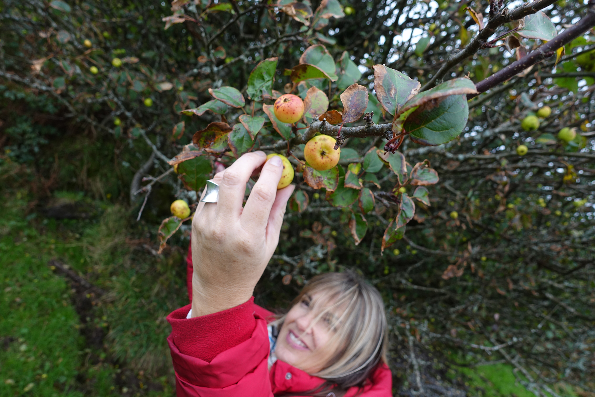 JAM_Mo-Picking-CrabApples
