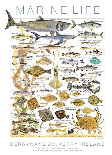Fish and Shellfish Print - Derrynane