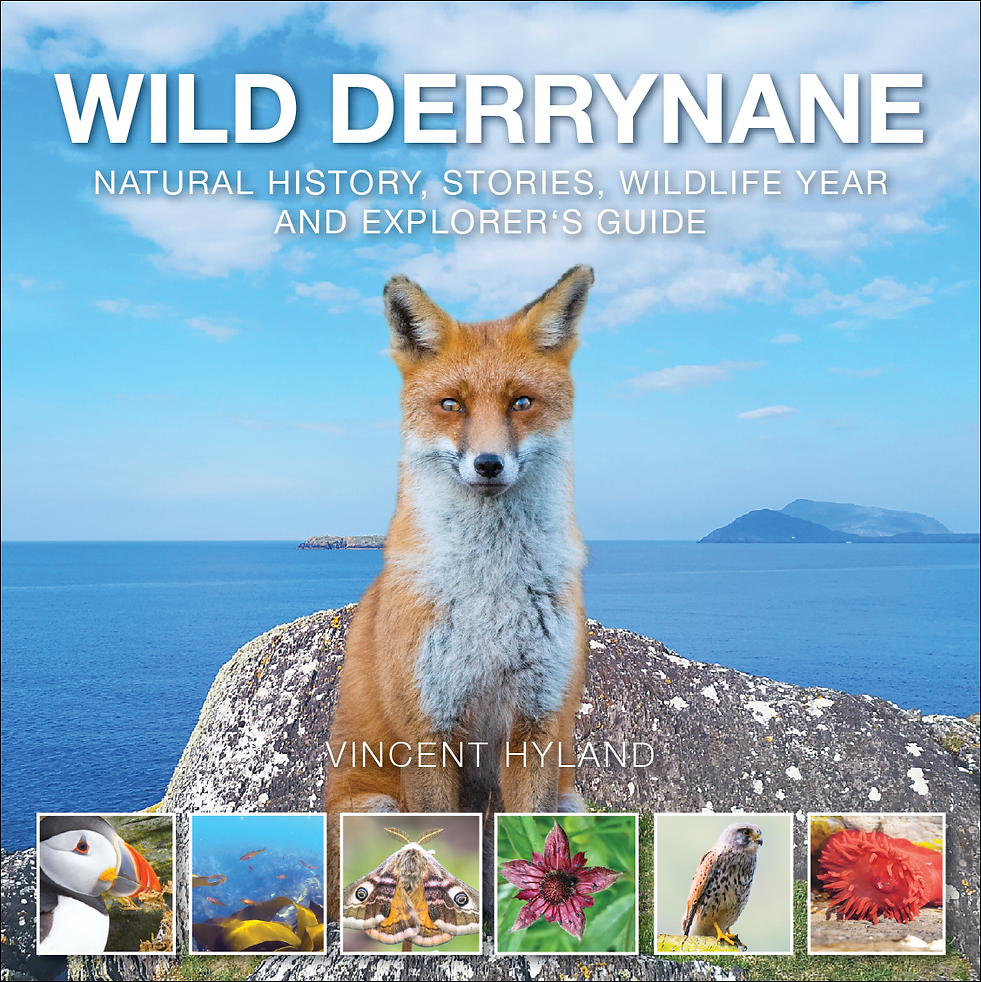 Screenshot 2020-10-17 at 19.32.44.png