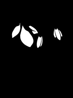 snowdrop-black.png