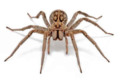 pragas-aranhas.png
