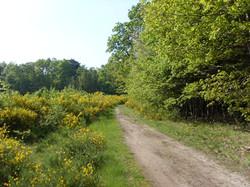 Un des Chemins de randonnée (wm)