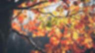 automne 2018.jpg