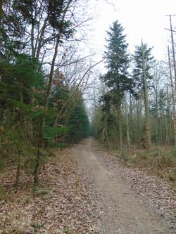Forêt 2015 wm