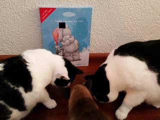 Adventskalender speciaal voor katten
