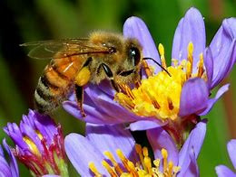 Bees, one more reason to love them!