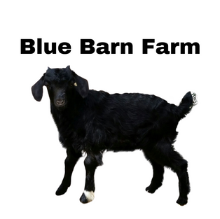 Blue Barn Farm