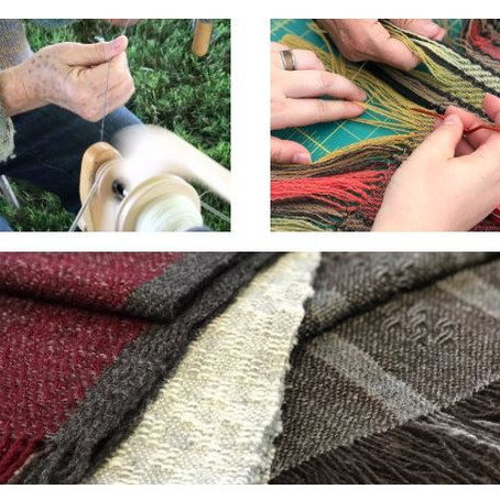 Workshops and an exciting Sheep to Shawl update!