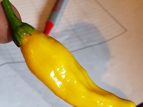 Pepper, lemon drop