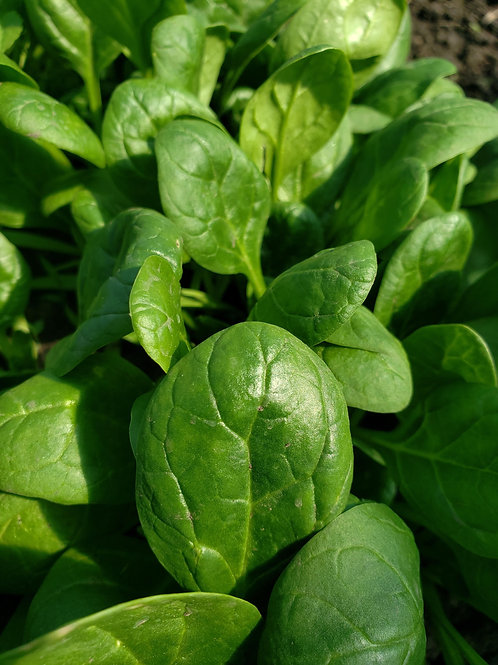 Spinach, 1/4# bag