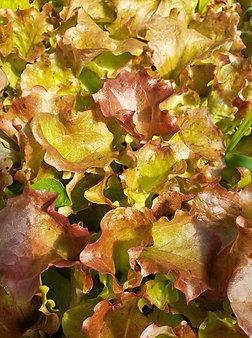 Red leaf lettuce, 1/4# bag