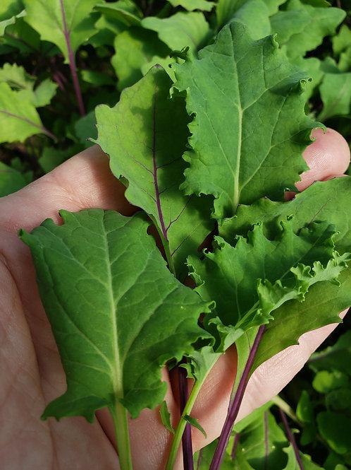 Mixed Baby Kale 1/4# bag