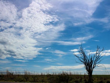 Cerrado: um dia para celebrar esta maravilha da natureza