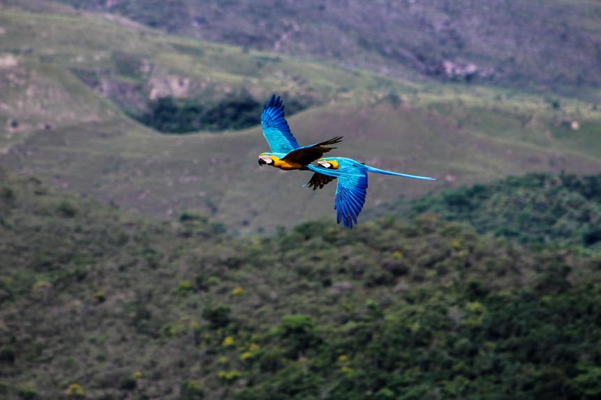 Macaws 13.jpg
