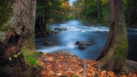 Autumn Stream.jpg