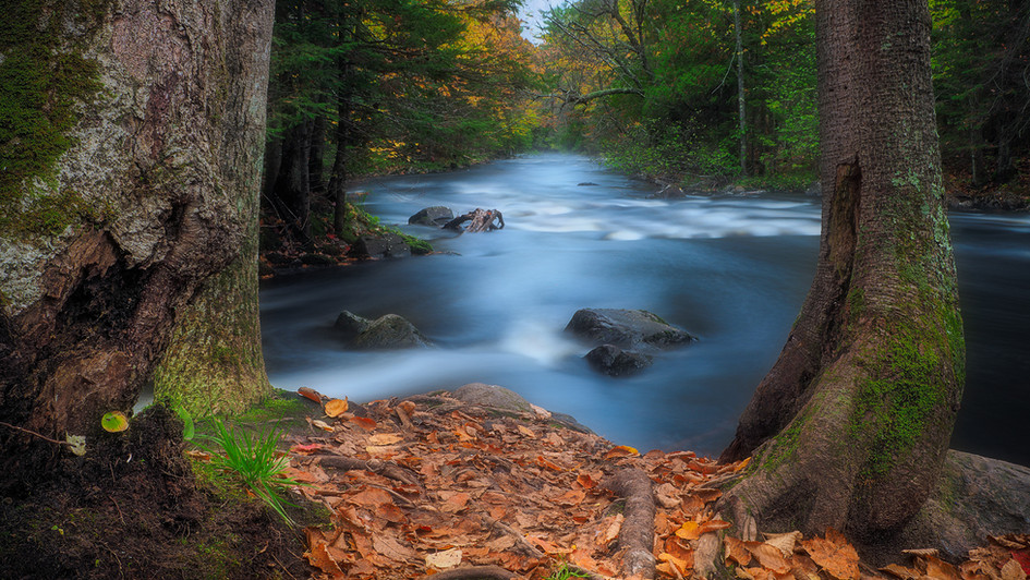 Autumn Stream.jpg