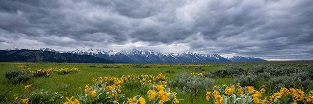 Western Vista.jpg