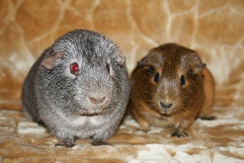 Агнессса и Сержио