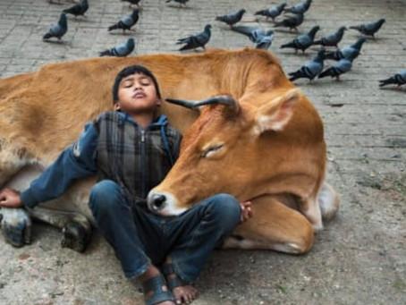 Steve Mc Curry's Animals, favourite photos