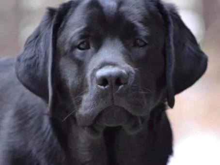Maupassant Vs Canines