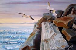 gannet three