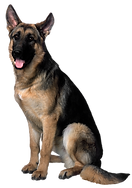 png german shepherd.png