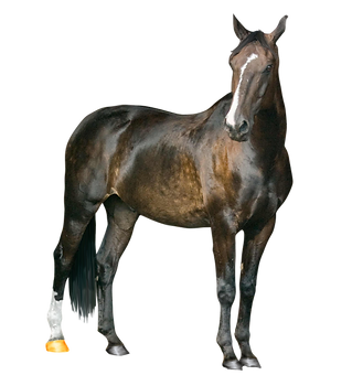 png horse.png