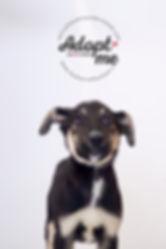 Tails-RoRo1Logo.jpg