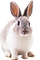 png rabbit.png