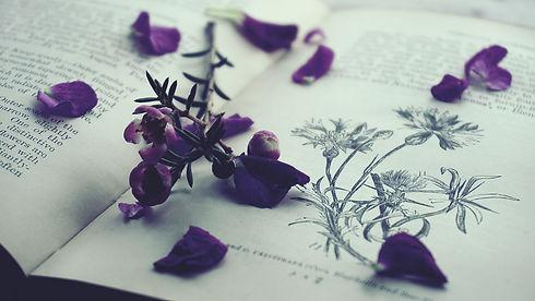 close-up-colors-lavender-color-1702949.j