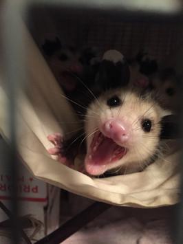 Say Ahh!